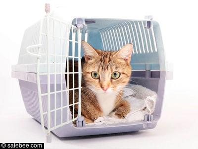 Cargo Kucing